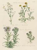 Fleurs Sauvages II Impressão giclée por Maria Mendez