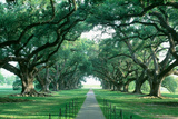 USA, Louisiana, New Orleans, brick path through alley of oak trees Fotografisk tryk af Panoramic Images,