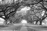 USA, Louisiana, New Orleans, brick path through alley of oak trees Fotografisk trykk av Panoramic Images,