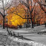 Park Pretty I Fotografie-Druck von Assaf Frank