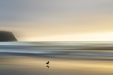 Morning Visit Photographic Print by Marvin Pelkey
