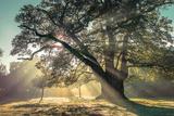 Breaking Through Fotografie-Druck von Assaf Frank