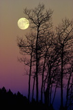A Full Moon Shines on Winters Leafless Branches Vægplakat af George F. Mobley