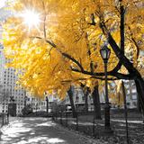 Park Pretty II Fotografie-Druck von Assaf Frank