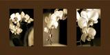 Fleurs exotiques Reproduction photographique par Cinzia Ryan