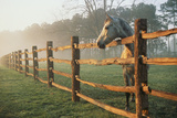 A Horse Watches the Mist Roll in over the Fields Wall Mural by Richard Nowitz