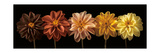Floral Salute Fotografie-Druck von Assaf Frank