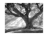 Andrew Oak, Afternoon Light Reproduction photographique par William Guion