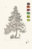 Tree Sketch - Larch Pôsteres por Maria Mendez