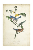 Delicate Bird and Botanical IV Prints by John James Audubon