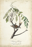 Delicate Bird and Botanical I Prints by John James Audubon