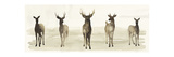 Deer Line I Prints by Grace Popp
