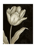 Classical Tulip I Premium Giclee Print by Ethan Harper