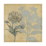 Shadow Floral III Premium Giclee Print by Megan Meagher