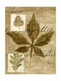 Leaf Collage III Premium Giclee Print by Kate Archie