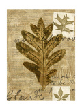Leaf Collage I Premium Giclee Print by Kate Archie