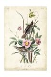 Seaside Finch Prints by John James Audubon