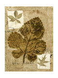 Leaf Collage IV Premium Giclee Print by Kate Archie