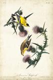 American Goldfinch Julisteet tekijänä John James Audubon
