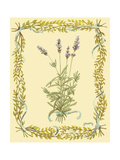 Small Lavender Giclée-Premiumdruck von Wendy Russell