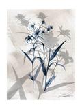 Indigo Bloom IV Posters af John Butler