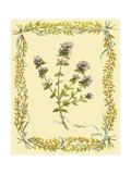 Small Thyme Giclée-Premiumdruck von Wendy Russell