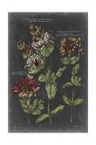 Vintage Botanical Chart IV Posters by  Vision Studio