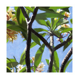 Plumeria Study I Art by Rick Novak