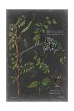 Vintage Botanical Chart VII Prints by  Vision Studio