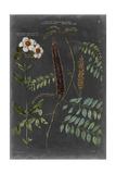 Vintage Botanical Chart V Art by  Vision Studio