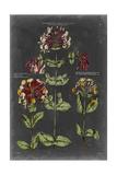 Vintage Botanical Chart I Prints by  Vision Studio
