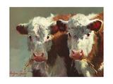 Cow Belles Prints by Carolyne Hawley