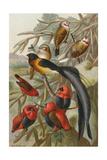 Weaver Birds Posters