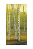 Sunny Birch Grove II Posters by Julie Joy