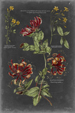 Vintage Botanical Chart II Posters by  Vision Studio