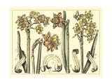Narcissus in Bloom II Poster par  Langlois