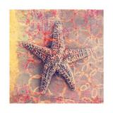 Seashell-Starfish Posters by Elena Ray