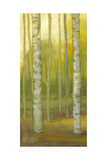 Sunny Birch Grove I Print by Julie Joy