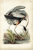 Great Blue Heron Posters por John James Audubon