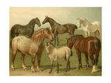 Horse Breeds II Poster von Emil Volkers