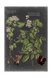 Vintage Botanical Chart VI Posters by  Vision Studio