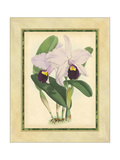 Fitch Orchid IV Posters por  Fitch