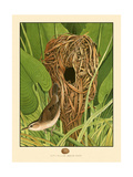 Long-Billed Marsh Wren Art