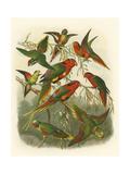 Red Cassel Birds I Giclée-Premiumdruck von  Cassell