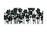 Black Flowers on White II Plakat af Norman Wyatt Jr.