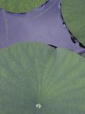 Lotus Detail X Fotografisk tryk af Jim Christensen