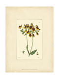 Yellow Curtis Botanical I Premium Giclee Print by  Vision Studio