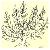 Buisson Posters av Henri Matisse