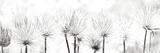 Pasque Flower Affiches par Katja Marzahn