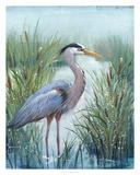 Marsh Heron I Giclee Print by Tim O'toole